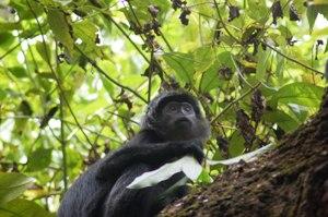 Cagar Alam satwa Lutung Jawa Bekasi Butuh Penanganan Serius