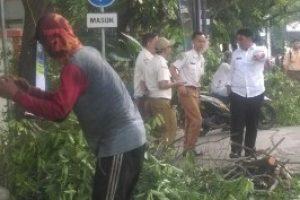Antisipasi Pohon Tumbang, Puluhan Pohon Tua Depan Kantor Kecamatan Bekasi Selatan Ditebang