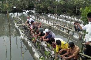 Hari Konservasi Alam Nasional PJB UP Muara Tawar Tanam 2.250 Mangrove