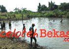 Kades Setia Asih ikat Silahturahmi Warga Tarumajaya Giat Lomba Guyub Tangkap Ikan