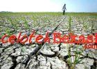 Kekeringan Masih Jadi Mimpi Buruk Kabupaten Bekasi Walau Miliaran Sudah Digelontorkan